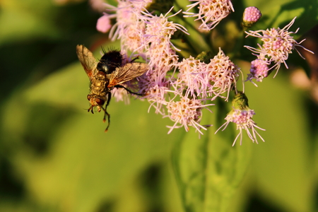 bee pollinating photo
