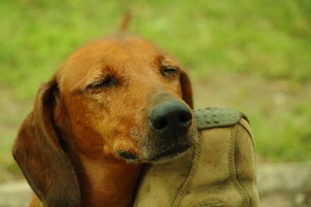cuddly: Cuddly Dog Stock Photo