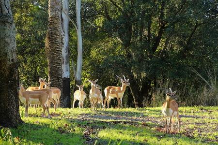 watch groups: Group of deer