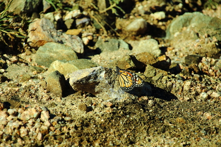 immobile: butterfly on the stones