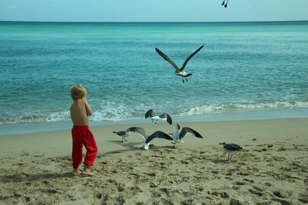 child and seagulls
