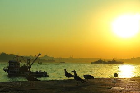 aya sofia: seagulls at golden hour in bosphorus