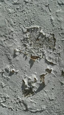 moisture: Wall moisture