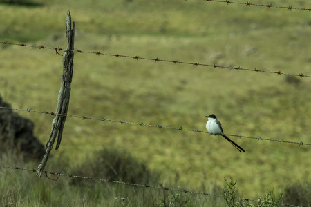 barbed wire fence: wild bird on barbed wire fence Stock Photo
