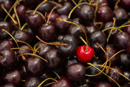 crop  stalks: a cherry red in the middle of ripe cherries