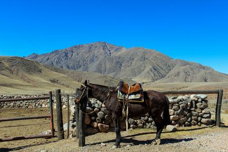 gefesselt: Pferd gebunden