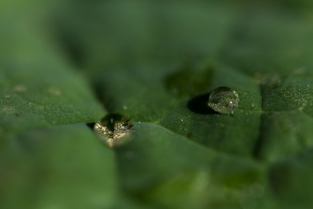 surface tension: drops