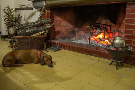 resting: pet resting near fireplace