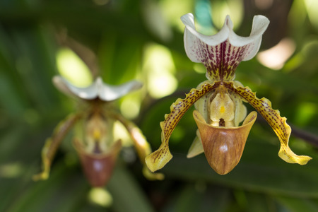 tempered: orchidea withe flowers