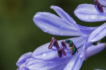 stamen wasp: wasp under Stamen