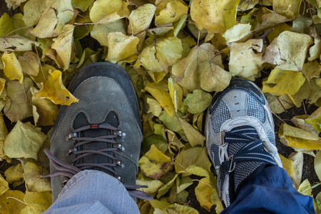 Stepping yellow leaves in autumn