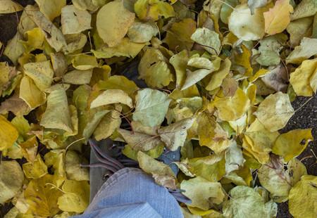 Feet on leaves fallen in autumn