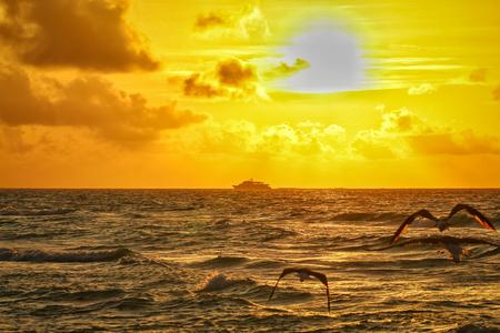 three seagulls flying towards the sun at sunrise Stockfoto