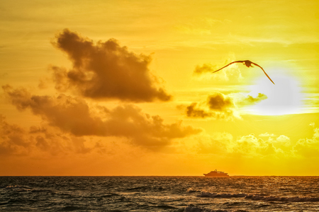 Seagull flying at sunrise