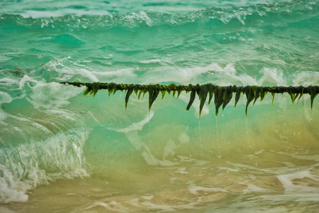 rope covered with seaweed entering the sea