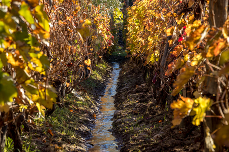 acequia in vine cultivation
