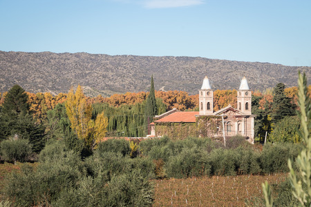 church between olive trees and vineyards Stockfoto