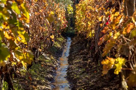 irrigation in vineyards Stockfoto