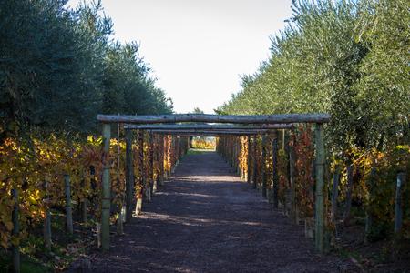 road between vines