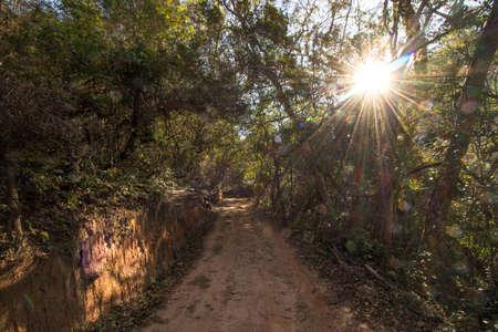 sunbath on a roadl in the amazon jungle