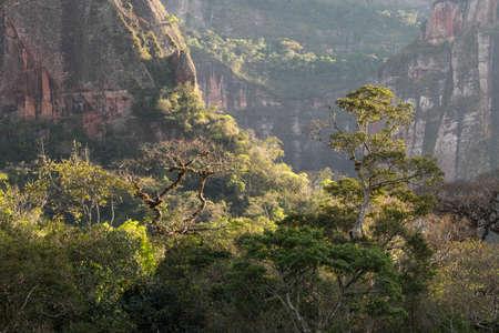 dense rainforest in the bolivian jungle