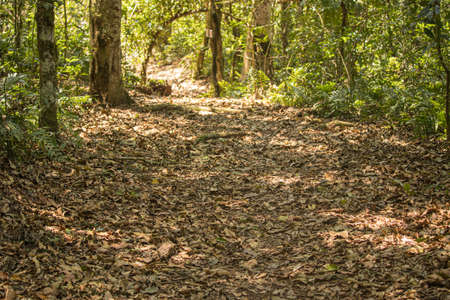 dry leaves on a trail in the amazon jungle