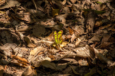 yellow and black butterfly on dry leaves illuminated by sun bath