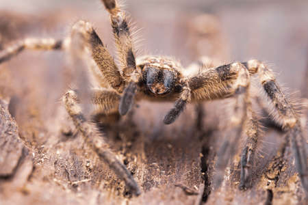 bid spider head and legs