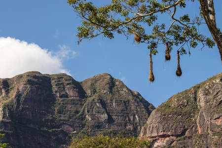 Weaver nest pending on tree next to mountain Standard-Bild
