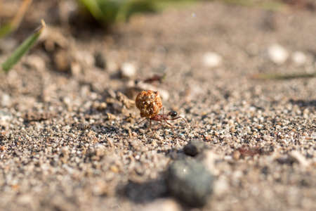 Ant carrying food to nest