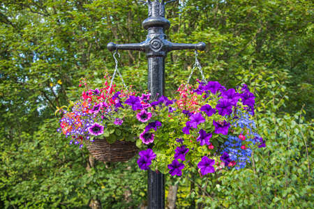 colorful flowers in post hanging on a lamp post