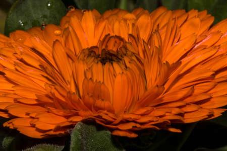 orange head flower in spring