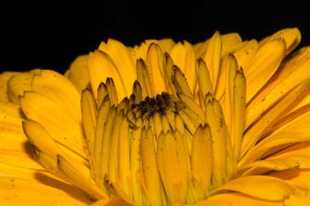 beautiful yellow head flower on spring