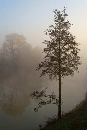 mistic: tree in the mistic fog