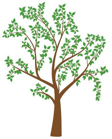 tree with leafs  Vector