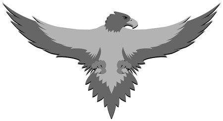 illustration of gray eagle in attack position Vector