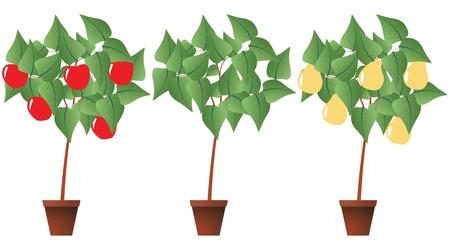 illustration of fruit plant with brown pot Illustration