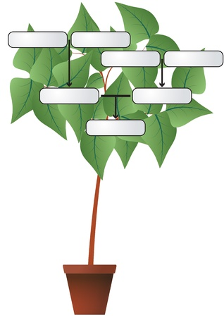 illustration of plant with label for genealogy Vector