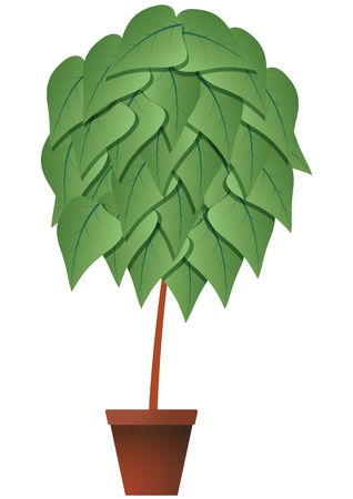 characteristic: illustration of plant with brown pot