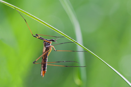 macro photography of crane fly with natural background photo