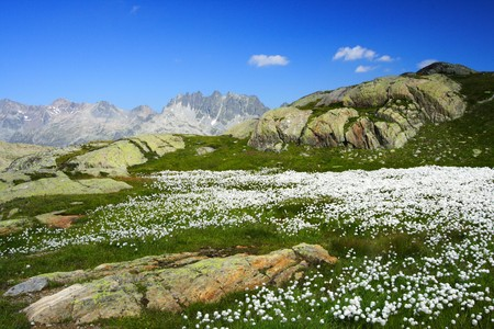 moutains: scenic moutains in summer with a carpet of white flowers Stock Photo