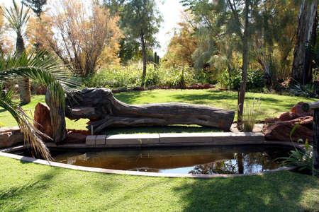 Portrait of a garden pond