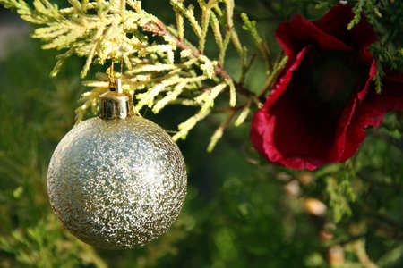 portrait of a golden ball hanging beside a red flower on a christmas tree