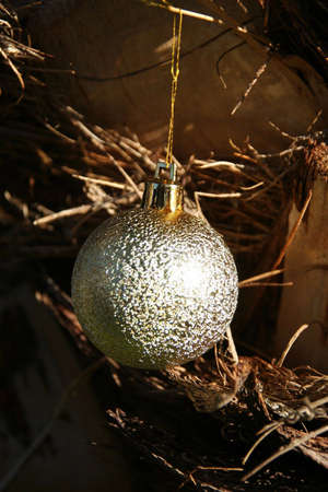 Portrait of a golden ball hanging against the bark of a palm tree