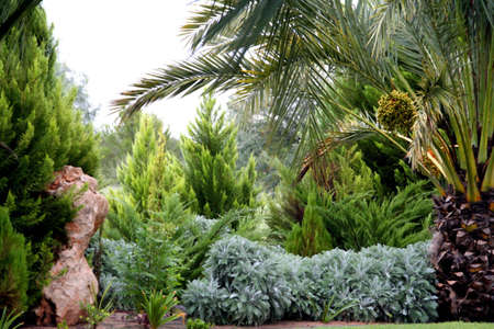 portrait of agreen garden, with lots of trees