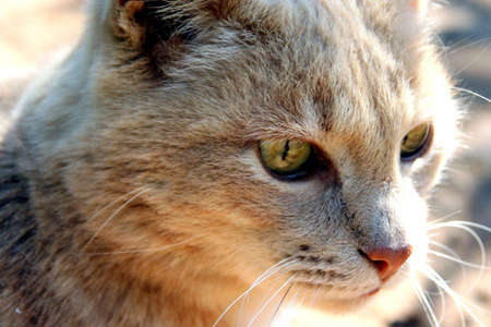 Portrait of a cat with green eyes, sitting in the sun Stock Photo