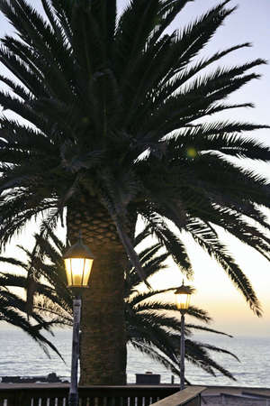 Portait of  palmtrees, lamps and setting sun