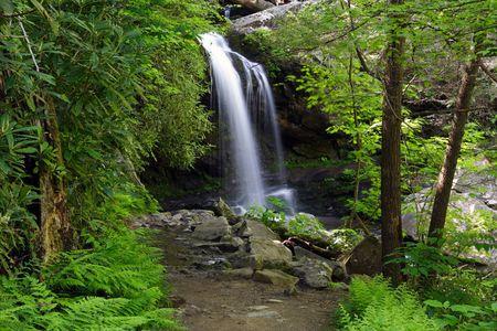 Camino a la gruta Falls, Parque Nacional de Great Smokey Mountains