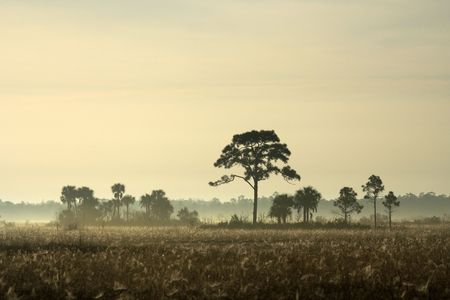 Early morning in the Everglades, Big Cypress National Preserve Stock Photo