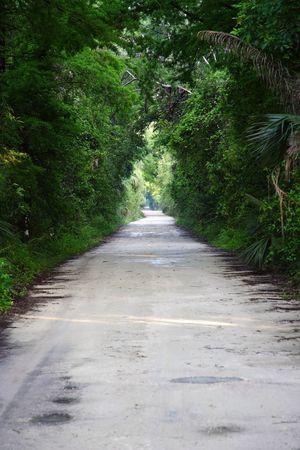 Janes Scenic Highway, Fakahatchee Strand reserva State Park, Florida Everglades  Foto de archivo